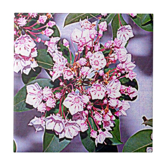 Pennsylvania Mountain Laurel Small Square Tile