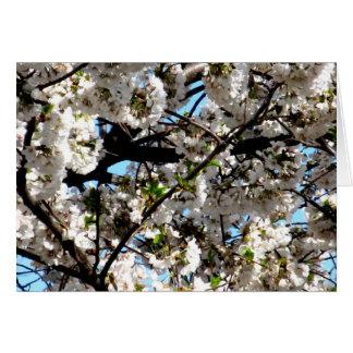Pennsylvania White Cherry Blossom Tree Greeting Ca Greeting Card