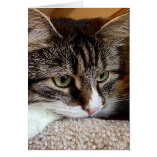 Penny For Your Thoughts Siberian Cat Note Card