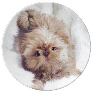 Penny orange liver Shih Tzu puppy Porcelain plate