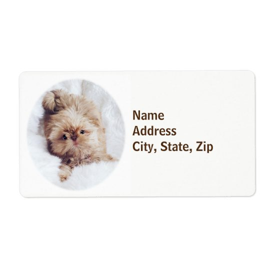 Penny orange liver Shih Tzu puppy shipping labels