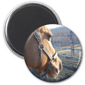Pensive Pony - magnet