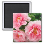 Peonies Magnets