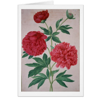 Peonies, plate 46 from the Nassau Florilegium (w/c Card