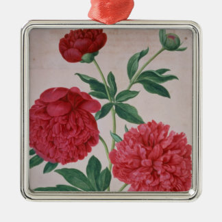Peonies, plate 46 from the Nassau Florilegium (w/c Silver-Colored Square Decoration