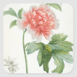 Peony, 1799 (colour stipple print) square sticker