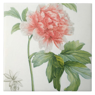 Peony, 1799 (colour stipple print) tile