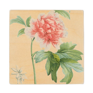 Peony, 1799 (colour stipple print) wood coaster