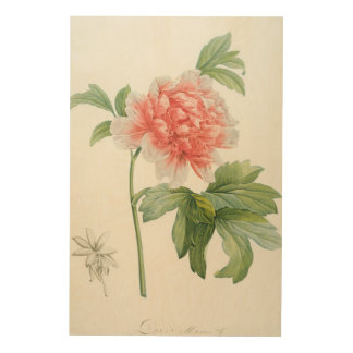 Peony, 1799 (colour stipple print) wood print