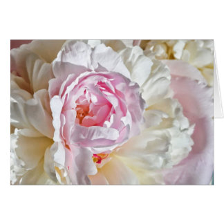 Peony Blossom Card
