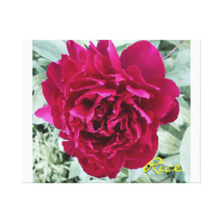 Peony in Bloom 2015 Original digital art on canvas Stretched Canvas Print