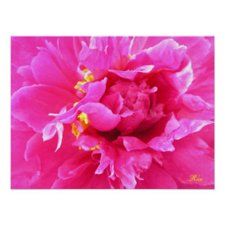 Peony in Bloom Poster