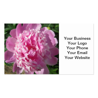 Peony Pink Sun Pack Of Standard Business Cards