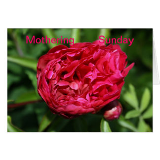 Peony Rose Mothering Sunday Card Card