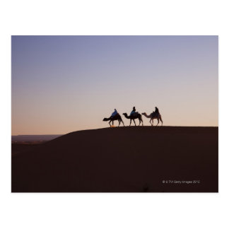People riding camels, Morocco Postcards