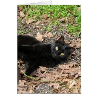 Pepper Cat Katrina Survivor Greeting Card