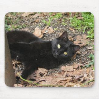 Pepper Cat Katrina Survivor Mouse Pad