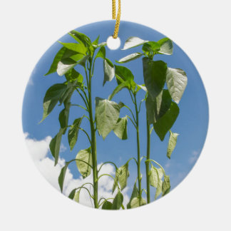 Pepper plant plug christmas ornament