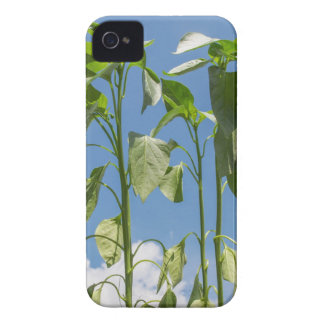 Pepper plant plug iPhone 4 Case-Mate cases