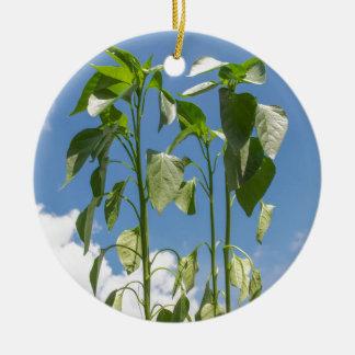 Pepper plant plug round ceramic decoration