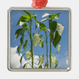Pepper plant plug Silver-Colored square decoration