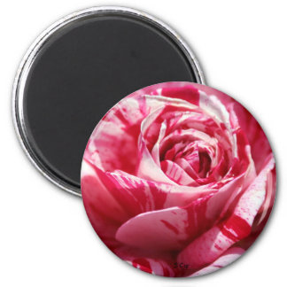 Peppermint Rose, S Cyr 6 Cm Round Magnet