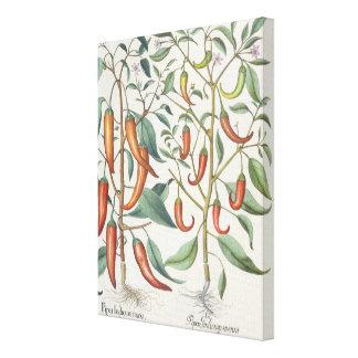 Peppers: 1.Piper Indicum maximum longum; 2.Piper I Canvas Print