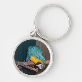 Perch Chewing Macaw Key Chains