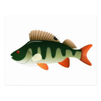 Perch Fish Postcard