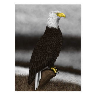 Perched Eagle Postcard