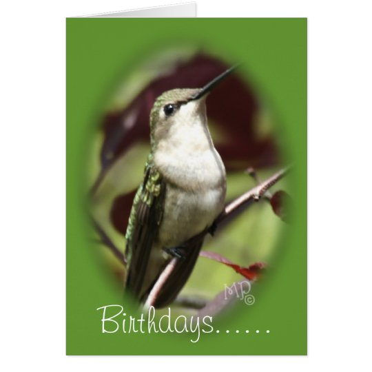 Perched female Hummingbird- customise any occasion Card