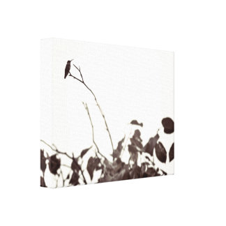 Perched Hummingbird 14x11 Wrapped Canvas Canvas Prints