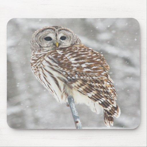 Perched Owl - Mousepad