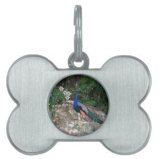 Perched Peacock Pet ID Tag