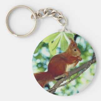 Perched Red Squirrel Key Chains