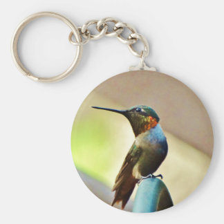 Perched Ruby and Green  little Hummingbird Key Chains
