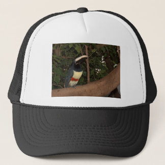 Perched Trucker Hat
