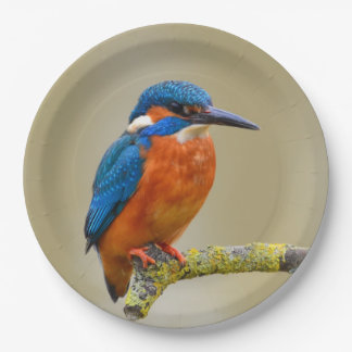Perching Kingfisher Paper Plate