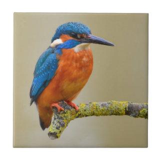 Perching Kingfisher Tile