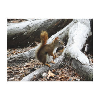 Perching Red Squirrel Canvas Prints