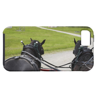 Perchon horses pulling cart  against historic iPhone 5 cases
