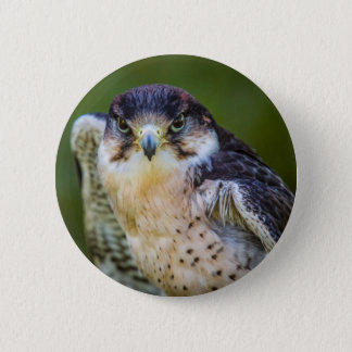 Peregrine Falcon 6 Cm Round Badge