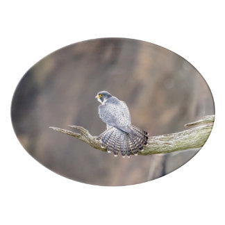 Peregrine Falcon at the Palisades Interstate Park Porcelain Serving Platter