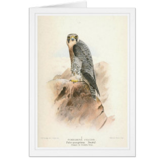 Peregrine Falcon Greeting Cards