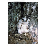 Peregrine Falcon Chick Greeting Card