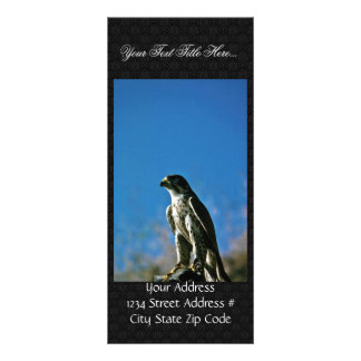 Peregrine Falcon Custom Rack Cards