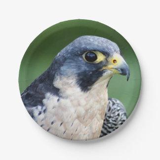 Peregrine Falcon Face Photo Paper Plate