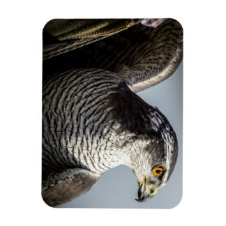 Peregrine Falcon Rectangular Photo Magnet