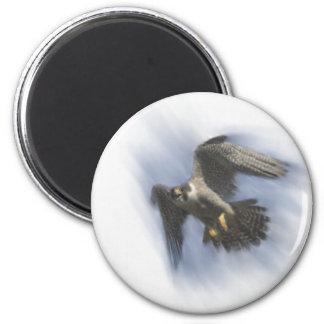 Peregrine Falcon in Flight 6 Cm Round Magnet