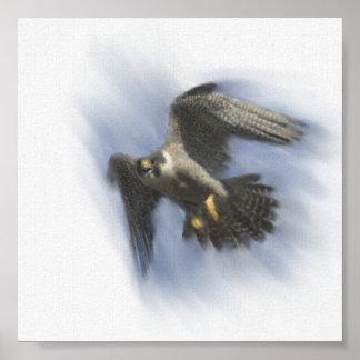Peregrine Falcon in Flight Poster